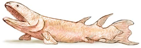 Fish Out of Water Fish With LegsDevonian Amphibians