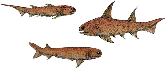 Three species of Acanthodian fish