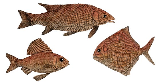Devonian Times - More About Ray-Fin Fishes